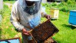 Проблемы пчеловодства в республике обсудили в Правительстве Республики Алтай